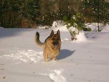 在雪的回声 库存图片