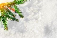 在雪的圣诞树分支在阳光下发出光线 免版税图库摄影