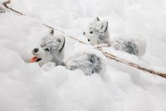 在雪的圣诞节装饰阿拉斯加的爱斯基摩狗 库存照片