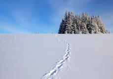 在雪的天猫座跟踪 免版税库存照片