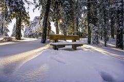 在雪的太阳 库存图片