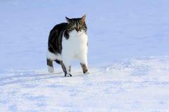 在雪的好奇小的猫 库存照片
