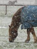 在雪的孤独的马 免版税库存图片