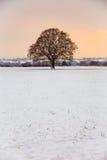 在雪的孤零零树 库存图片