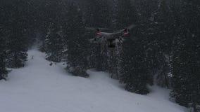 在雪的寄生虫飞行与树在背景中 库存图片