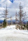 在雪的小径和在自然灾害以后的死的树 免版税图库摄影