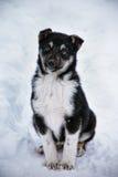 在雪的小狗 库存照片