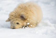 在雪的小狗 图库摄影