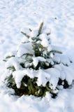 在雪的小的杉树 免版税库存照片