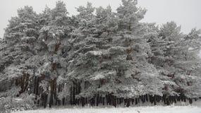 在雪的巨人 冬天奇迹 免版税图库摄影
