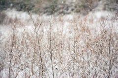 在雪的干草 免版税库存照片