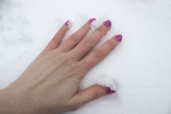 在雪的手 库存图片