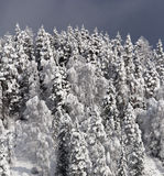 在雪的春天木头 免版税图库摄影
