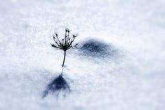 在雪的杂草 免版税库存图片