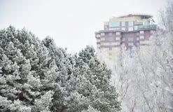 在雪的杉木以一栋多层的居民住房为背景 免版税图库摄影