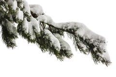 在雪的杉木分行 库存照片