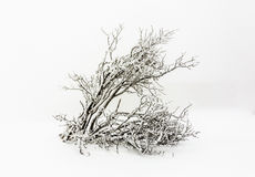 在雪的杉树在飞雪前面 免版税库存照片