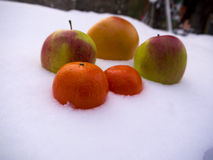 在雪的果子 库存照片