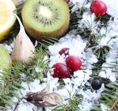 在雪的果子 免版税图库摄影