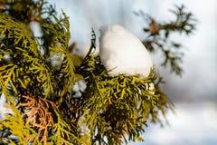 在雪的枝杈枝杈 库存图片