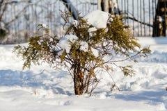 在雪的枝杈枝杈 免版税库存照片