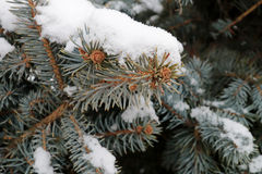 在雪的枝杈树在公园 免版税库存图片