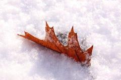 在雪的树叶子 免版税库存照片