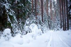在雪的树在冬天森林里 免版税库存照片