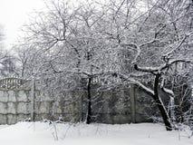 在雪的树在篱芭附近 免版税库存图片