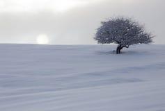 在雪的树在黎明太阳 库存图片