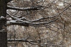 在雪的树在12月在一个公园在莫斯科 库存照片