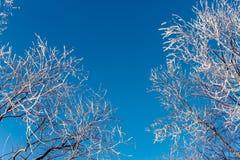 在雪的树早午餐 库存照片