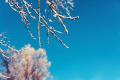 在雪的树早午餐 图库摄影