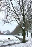 在雪的树车道 库存图片