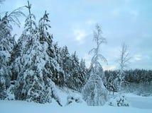 在雪的树 免版税库存图片