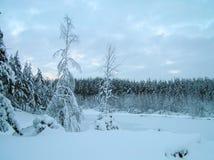 在雪的树 免版税库存照片