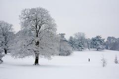 在雪的树 库存照片