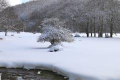 在雪的树 库存图片