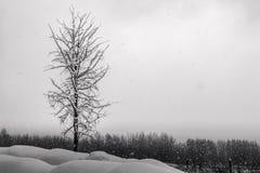 在雪的树coverend 库存照片