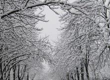在雪的栗子 库存图片