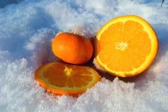 在雪的桔子 库存图片