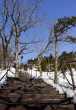 在雪的桥梁 免版税库存图片