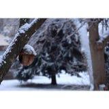 在雪的橡子 免版税库存图片