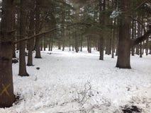 在雪的步行在伊夫兰摩洛哥 免版税库存图片