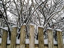 在雪的灌木野玫瑰果在篱芭后 图库摄影