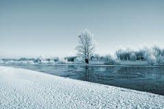 在雪的灌木 免版税库存照片