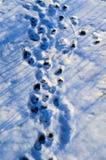 在雪的爪子打印 库存图片