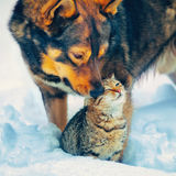 在雪的狗和猫 免版税库存图片