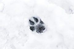 在雪的狗爪子 库存图片