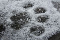 在雪的猫印刷品 免版税库存图片